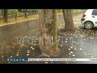 Наломали дров - дорожники закатали в асфальт дерев...