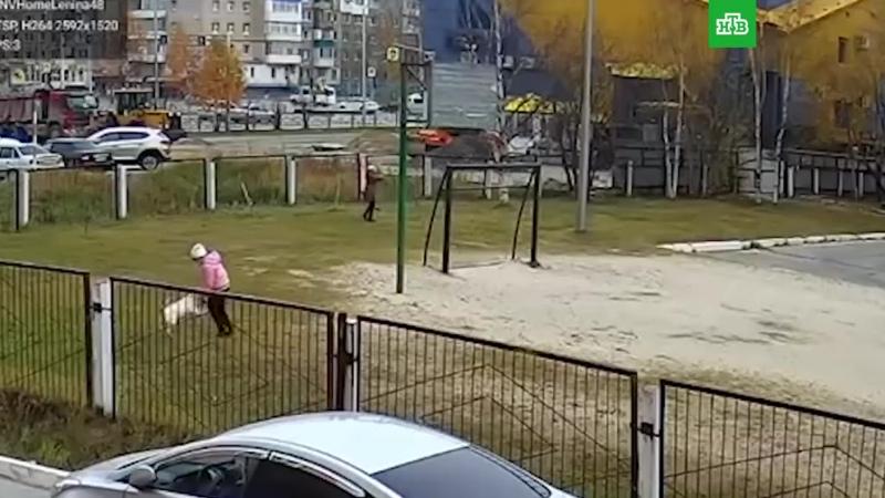 Собака напала на ребенка в Нижневартовске