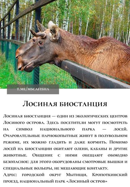 ТОП-10 интересных мест в Подмосковье для отдыха с ...