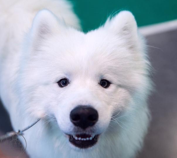 Выставка «Город собак» в «Экспофоруме» На выставке...