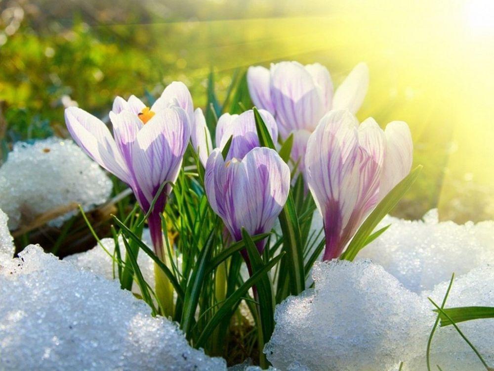 Ура, наконец то весна, всех с первым ее днем