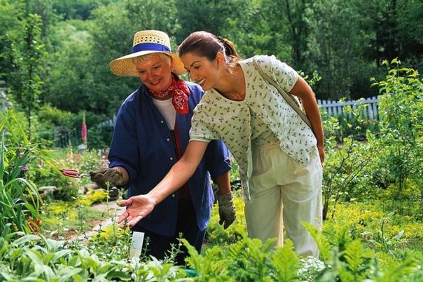 Самые полезные и хитрые советы для дачников садоводов 1. Свекла любит полив методом дождевания и частые, но осторожные рыхления. 2. После второго прореживания свеклу подкармливают минеральными
