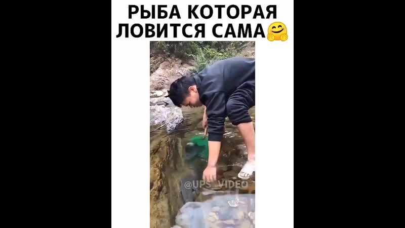 Рыба которая ловится сама