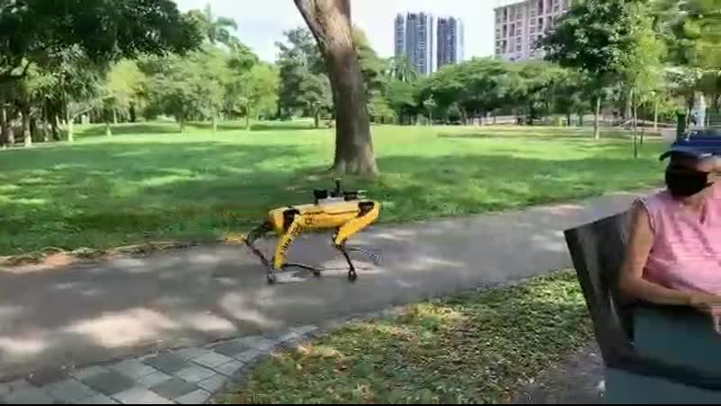 Gruselig Roboterhund in Singapur patrouilliert in Park und kontrolliert Social Distancing