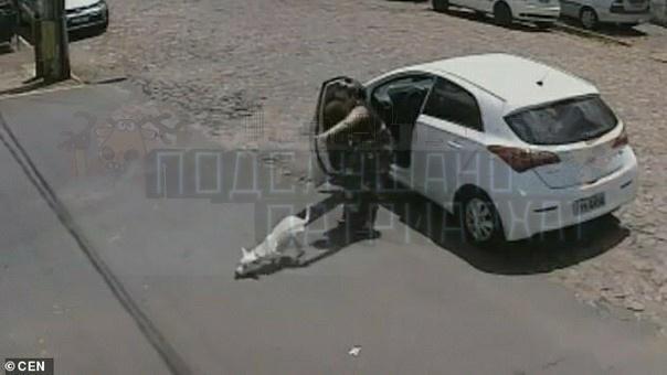 Хозяйка покалеченной собаки решила от нее избавиться Жестокость вагинозавров по отношению к заведомо более слабым поражает. В данном случае плакали даже суровые рейнджеры южно-американских