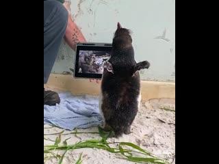 Пингвин по кличке Пьер обожает смотреть мультфильмы про пингвинов.