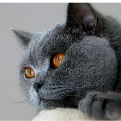 tydicar2011 avatar