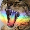 пикчи для котиков ㋛
