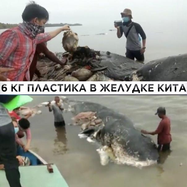 Пластиковые стаканы, пакеты, тапочки, нейлоновый мешок и еще более 1000 предметов обнаружили в туше кита в Индонезии